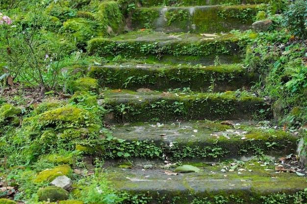 Pokrycie roślin kamienne schody w parku