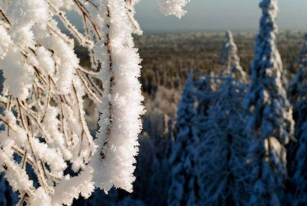 Pokryta grubą warstwą kryształków lodu oszronionych gałązek na rozmytym tle