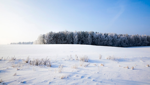 Pokryta puszystym białym lasem świeżego śniegu w zimie, krajobraz w mroźnych mroźnych warunkach zimowych w słoneczny, jasny dzień