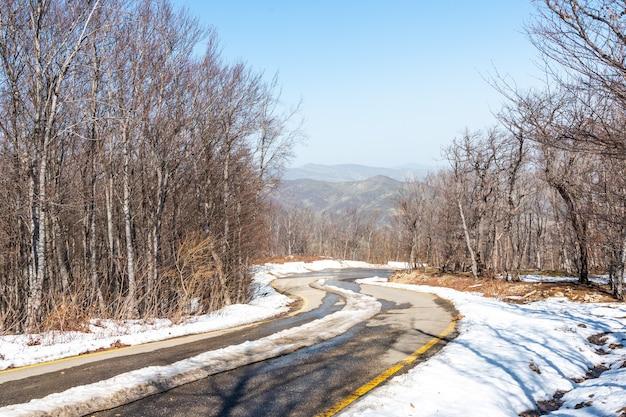 Pokryta śniegiem droga asfaltowa w lesie