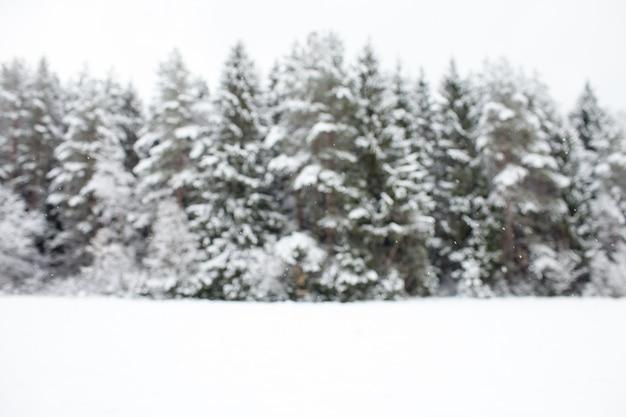Pokryta śniegiem równina zimowa z nieostrym tłem lasu sosnowego z kopią