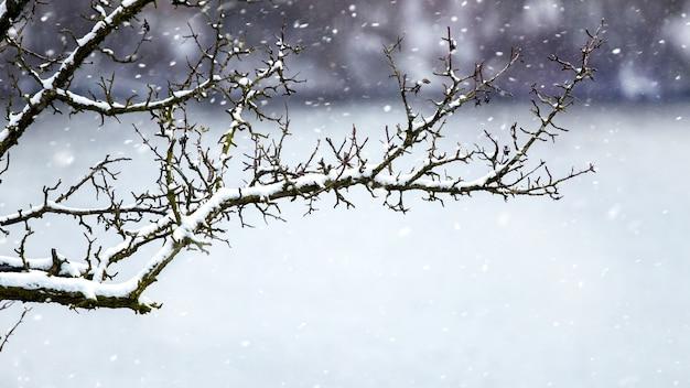 Pokryta śniegiem, sucha gałąź drzewa w pobliżu rzeki podczas opadów śniegu