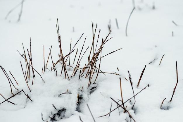 Pokryta śniegiem sucha trawa po zamieci na polu