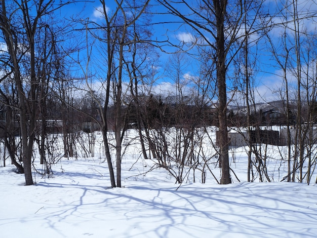 Pokryta śniegiem ziemia na niewidzialną ziemię. jest czysta zima.