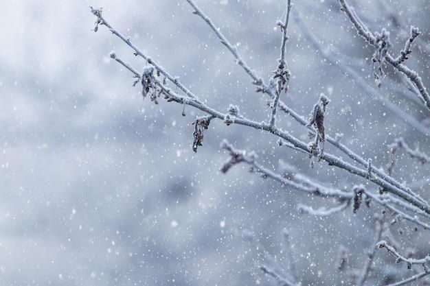 Pokryta szronem gałąź drzewa na rozmytym tle podczas opadów śniegu
