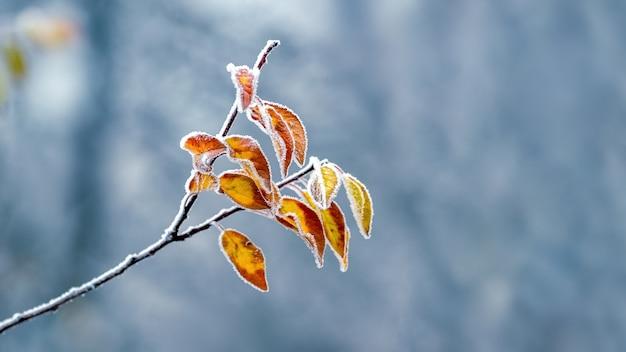 Pokryta szronem gałąź drzewa z suchymi liśćmi