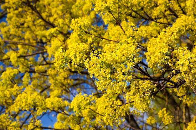 Pokryte grubym i jasnym listowiem drzew liściastych