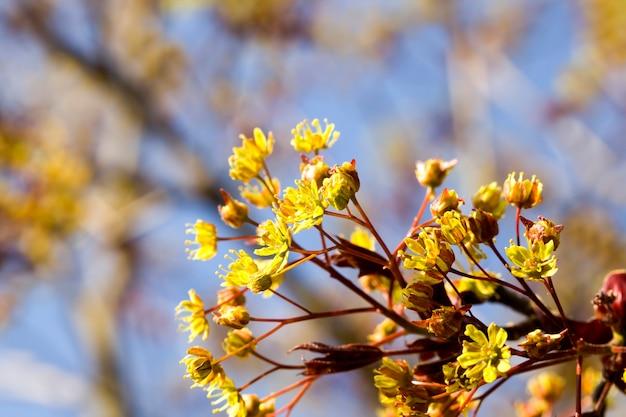 Pokryte grubymi i jasnymi liśćmi drzew liściastych w okresie letnim lub wiosennym, porastającym naturę drzew