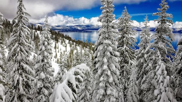Pokryte śniegiem drzewa nad jeziorem tahoe