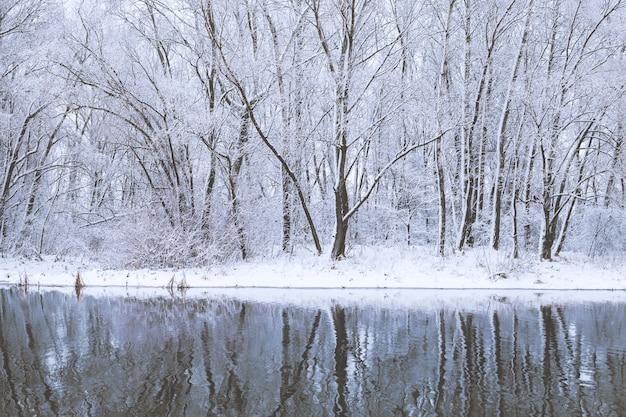 Pokryte śniegiem drzewa odbijają się w wodzie