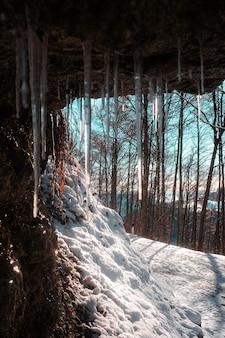Pokryte śniegiem drzewa w ciągu dnia
