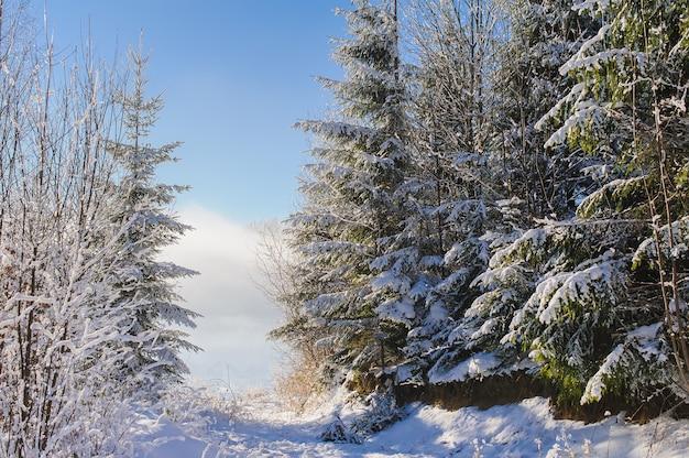 Pokryte śniegiem drzewa w górach zimą