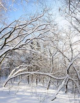 Pokryte śniegiem drzewa zimowe