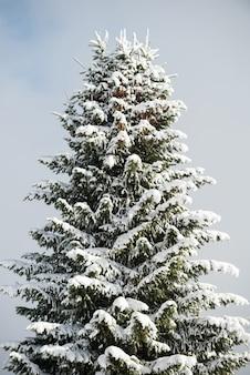 Pokryte śniegiem drzewo w zimie