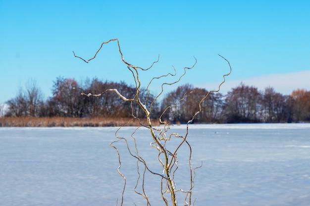 Pokryte śniegiem faliste gałęzie drzew na brzegu rzeki