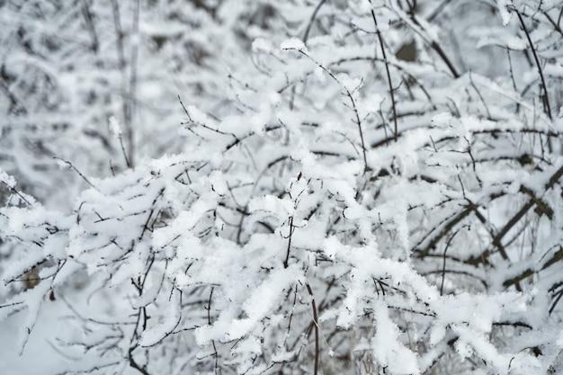 Pokryte śniegiem gałąź drzewa w zimowym lesie.