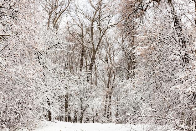 Pokryte śniegiem gałęzie drzew i krzewów zimą w parku miejskim.