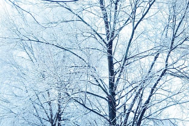 Pokryte śniegiem gałęzie drzew