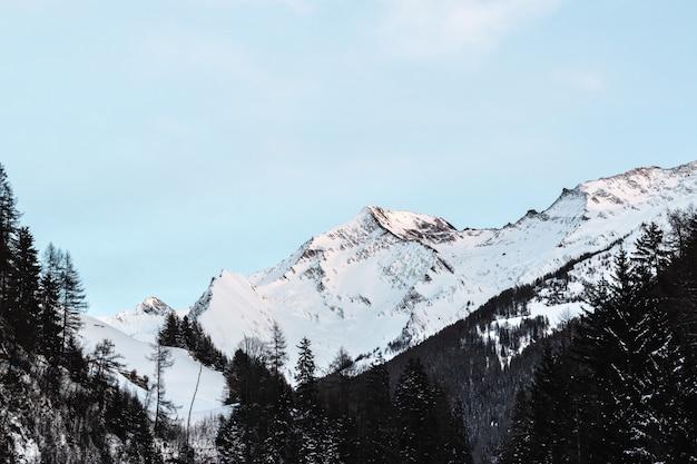 Pokryte śniegiem góry z czarnymi drzewami pod błękitne niebo w ciągu dnia
