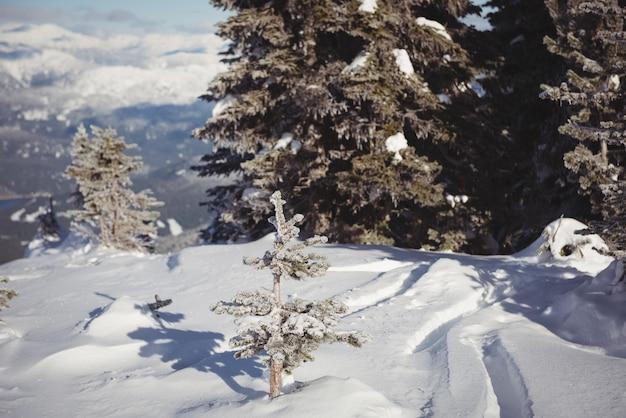 Pokryte śniegiem krajobraz zimą
