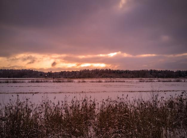 Pokryte śniegiem pole z łodygami trawy na pierwszym planie i zachmurzone niebo, ciemne nastrojowe zdjęcie