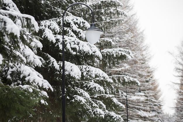 Pokryte śniegiem zielone drzewo. zimowe miękkie tło ze świerkiem