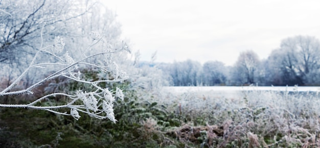 Pokryte szronem drzewa, krzewy i trawa nad rzeką w zimowy poranek