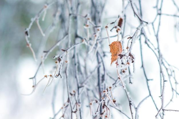 Pokryte szronem gałęzie brzozy i ostatni suchy liść na gałęzi