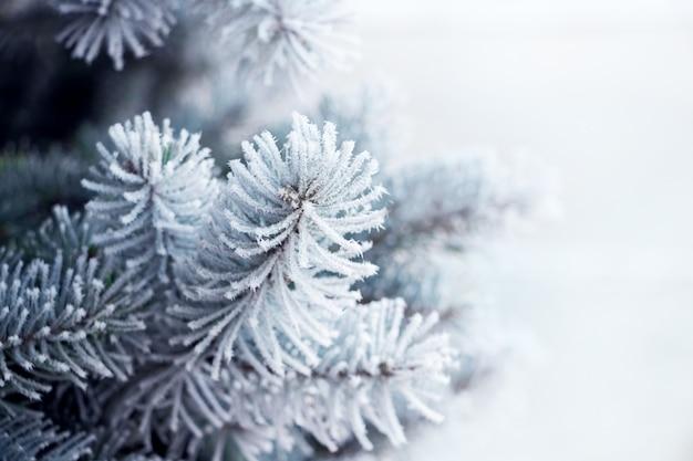Pokryte szronem gałęzie świerkowe z bliska. boże narodzenie nowy rok magia. obraz banera