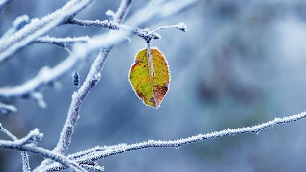Pokryte szronem gałęzie z samotnym suchym liściem, zimowe tło