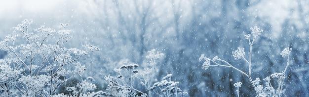 Pokryte szronem gałęzie zwiędłych roślin na tle drzew zimą podczas obfitych opadów śniegu, widok zima, tło boże narodzenie