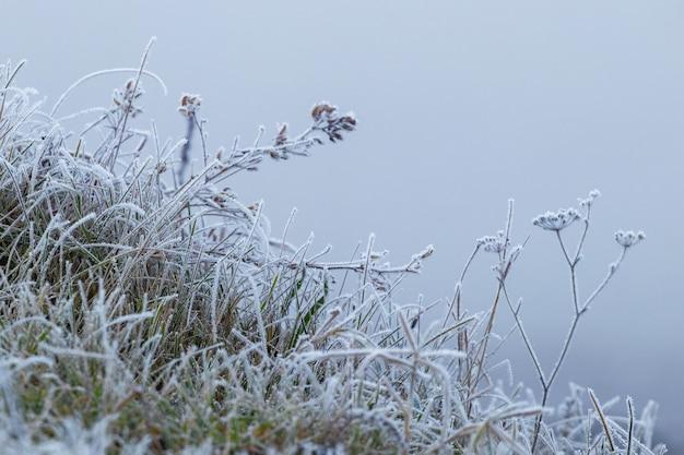 Pokryte szronem gałęzie zwiędłych roślin zimą na rozmytym tle