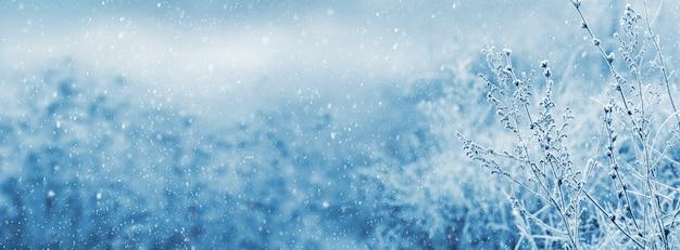 Pokryte szronem łodygi suchych roślin na rozmytym tle podczas opadów śniegu. boże narodzenie i nowy rok w tle