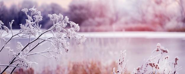 Pokryte szronem rośliny nad brzegiem rzeki rano o wschodzie słońca