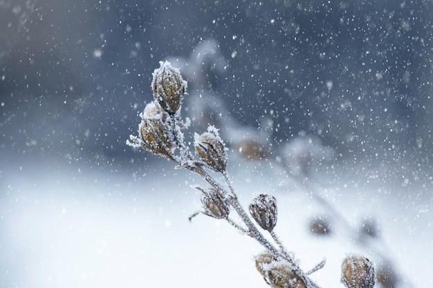 Pokryte szronem suche rośliny w lesie na rozmytym tle podczas opadów śniegu, zimowe tło