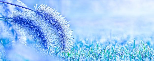 Pokryty lodem kłos zboża. pierwsze jesienne przymrozki, pogarszająca się pogoda.