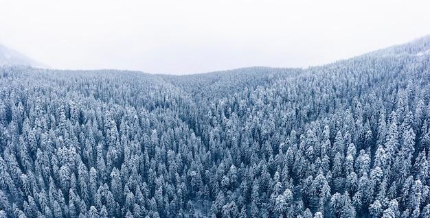 Pokryty śniegiem las iglasty wysoko w górach, widok z drona.