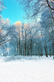 Pokryty śniegiem las w słoneczny dzień.