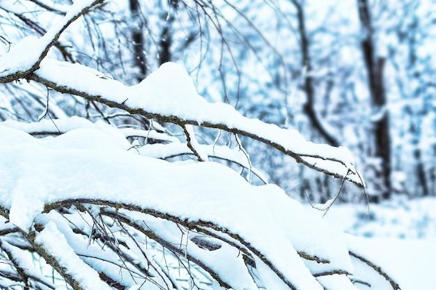 Pokryty śniegiem las w winter park.