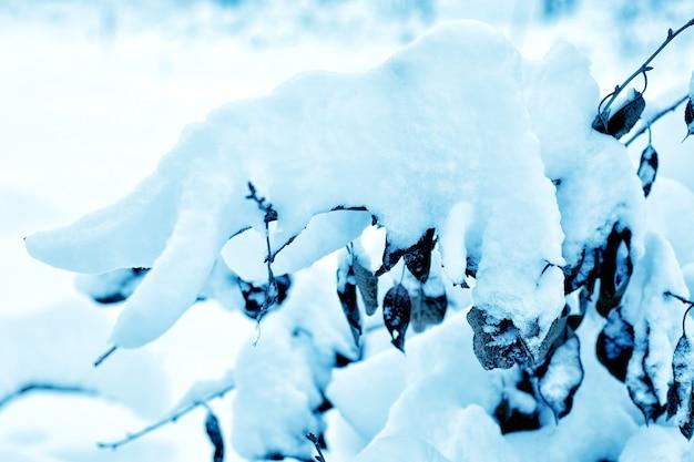 Pokryty śniegiem las.