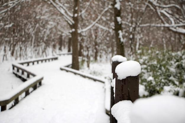 Pokryty śniegiem płot w zimny, zimowy dzień