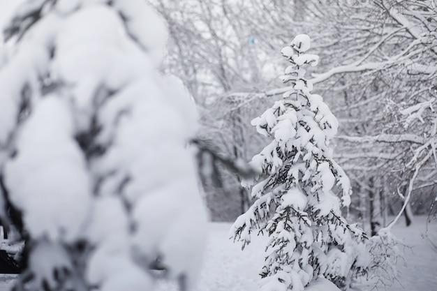 Pokryty śniegiem zimowy park i ławki. park i molo do karmienia kaczek i gołębi. rodzina na spacerze w śniegu pokryta jesiennym parkiem.