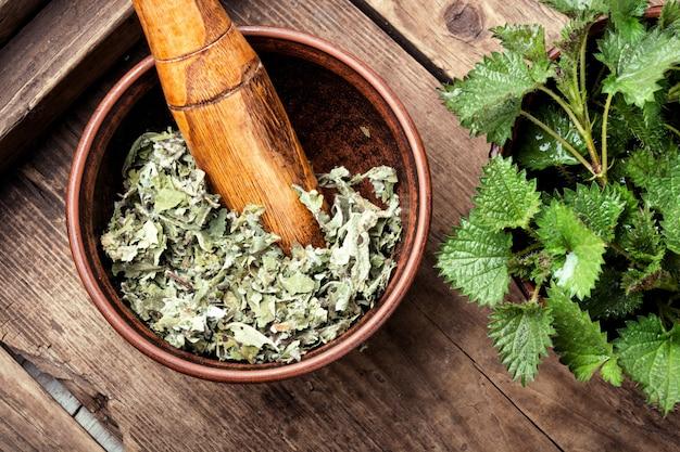 Pokrzywa, zioło medyczne urtica