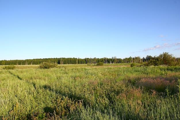 Pola i lasy w kraju rosja