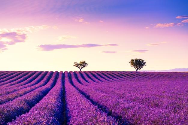 Pola lawendy w pobliżu valensole provence francja piękny letni krajobraz o zachodzie słońca