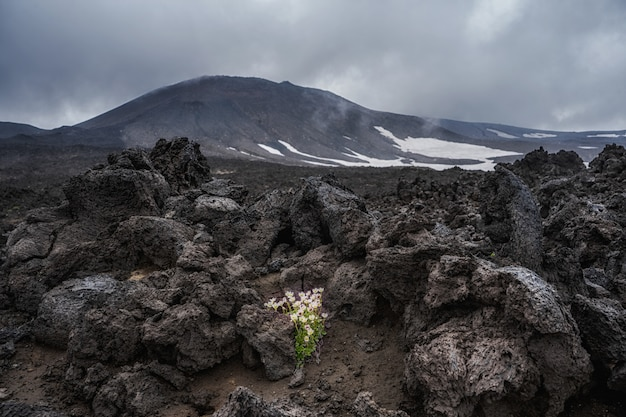 Pola lawy wulkanu tolbachik na kamczatce