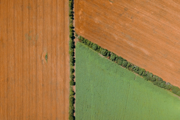 Pola rolnicze z uprawami kukurydzy i pszenicy widok z lotu ptaka figury geometryczne utworzone z różnych cu ...