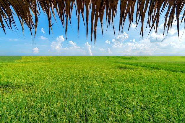 Pola ryżowe i chaty, oglądane od wewnątrz