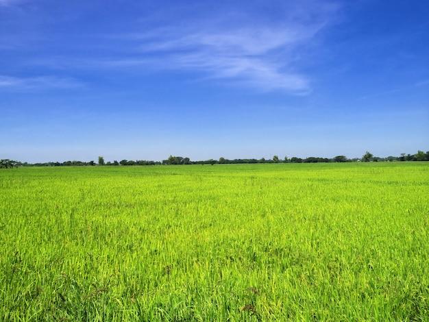 Pola ryżowe na filipinach