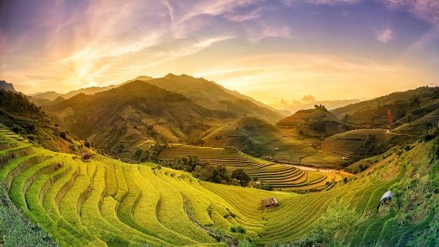 Pola ryżowe na tarasie o zachodzie słońca w mu chang chai, yen bai, wietnam